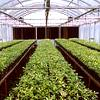 Commercial Purpose Greenhouse/ Mist Chamber