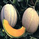 Round Yellow Colored Cantaloupe