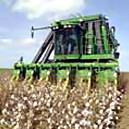 Cotton Picker With 350-horsepower Engine