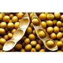 High Protein Soybean Oil Meal