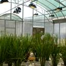 Biologically Safe Containment Greenhouse