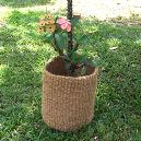 Natural/ Dyed Coloured Decorative Coco Basket