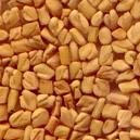 Hygienically Processed Fenugreek Seed