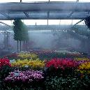 Irrigation And Fogging System