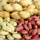 Shelled/ Unshelled Processed Peanuts