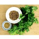 Coriander Seed In Powder Form