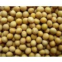 Poly-Unsaturated Fatty Acids Enriched Soybean