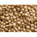 Nutrition Enriched Sorghum Seeds