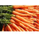 Nutrition Enriched Fresh Carrot