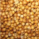 Hygienically Packed Coriander Seeds