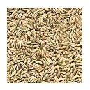Hygienically Packed Caraway Seeds