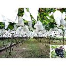 Non-Woven Fruit Covering Fabric
