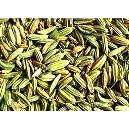 Fennel Seeds With Nutritional Properties