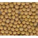 Hygienically Packed Soybean Seeds