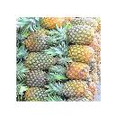 Hygienically Packed Fresh Pineapple