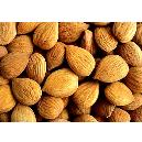Contamination Free Apricot Kernels