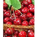 Pure And Fresh Red Cherry