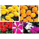 Exterior Decorative Flower Seeds