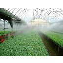 Fogging System For Green House