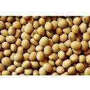 Nutrition Enriched Soyabean Seeds