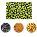 Hygienically Packed Fresh Pulses