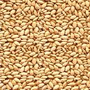 Vitamin B Enriched Sesame Seed