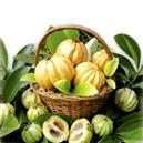 Herbal Garcinia Cambogia Extract
