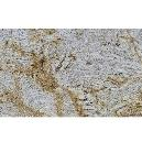 Construction Purpose Smooth Finished Granite Tile