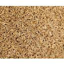 Hygienically Packed Cumin Seed
