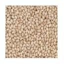 Unpolished Type Natural Sesame Seed