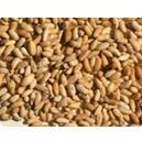 Pure And Natural Neem Seed