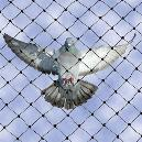 Smooth Finished Pigeon Net
