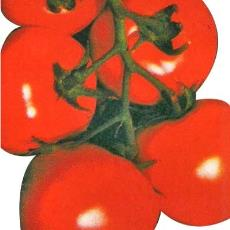 Agricultural Purpose Tomato Seed